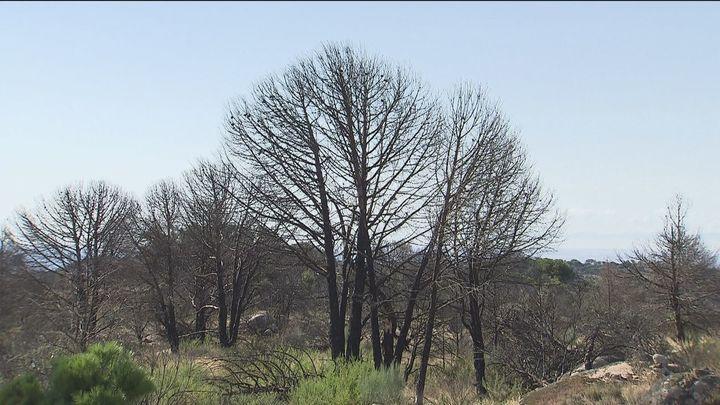 Comienza la reforestación en Cadalso de los Vidrios de la zona afectada por el incendio  de 2019