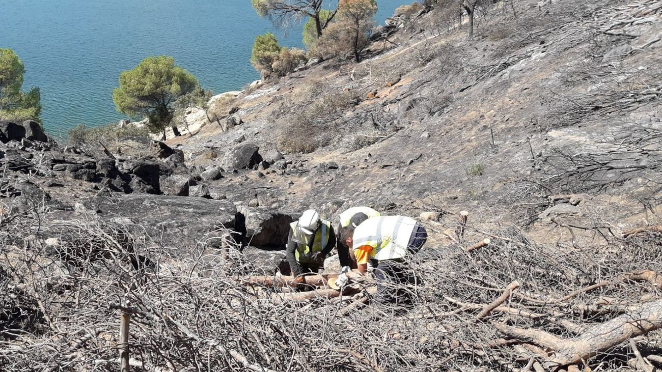 La Confederación del Tajo inicia la restauración de la zona quemada del embalse de San Juan