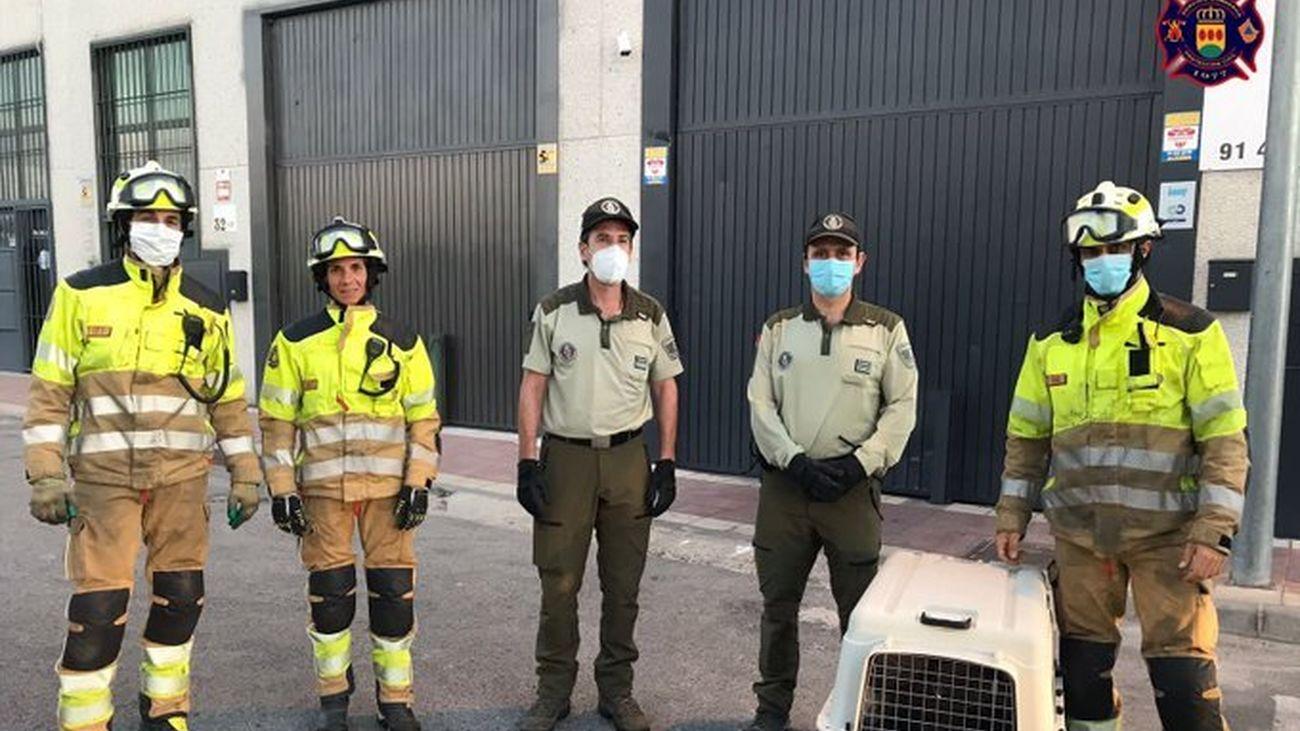 Agentes forestales y bomberos rescatan a un buitre atrapado en una nave industrial de Alcorcón