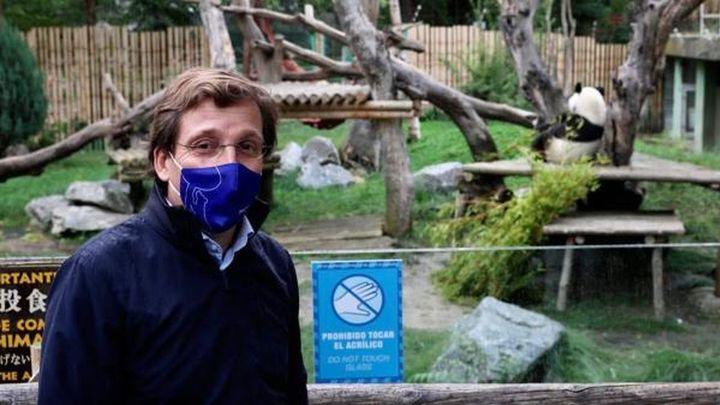 Almeida visita a los gemelos de oso panda nacidos en el Zoo de Madrid