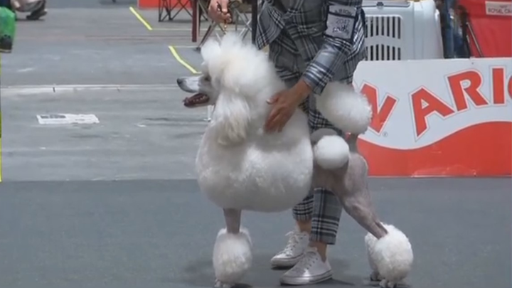 Estos son los perros más guapos de Madrid