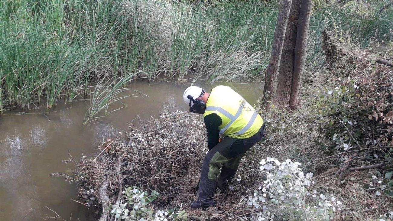 Alcalá recupera poco a poco el bosque del Henares arrasado por Filomena