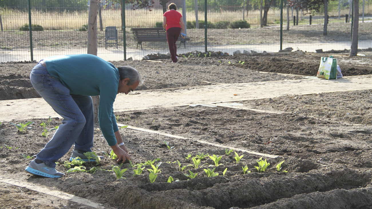 Huertos urbanos para los mayores de 65 años en Leganés