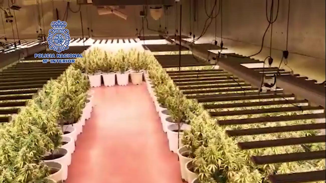 Desmantelada una sofisticada plantación de marihuana en Guadalajara