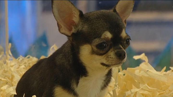 El Gobierno obligará a los dueños de mascotas a hacer un curso formativo