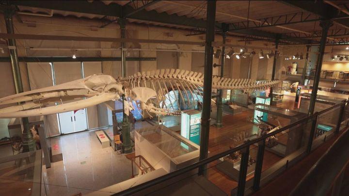 El Museo de Ciencias Naturales, el segundo más antiguo del mundo, cumple 250 años