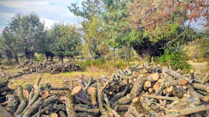 Manzanares El Real reparte leña a los vecinos procedente del 'trasmocho'