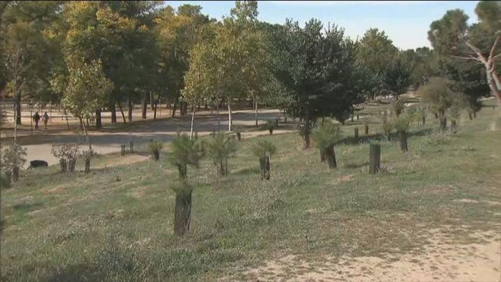 Madrid distribuye los 100.000 árboles que plantará para reponer la destrucción causada por 'Filomena'