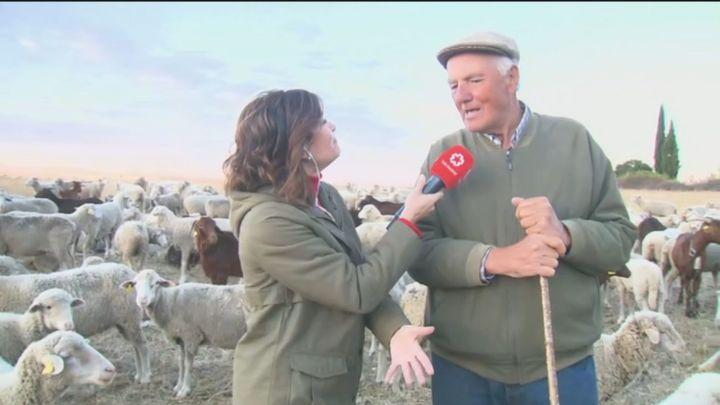 Más de 1.000 ovejas y 100 cabras llegan a Madrid para celebrar la Fiesta de la Trashumancia