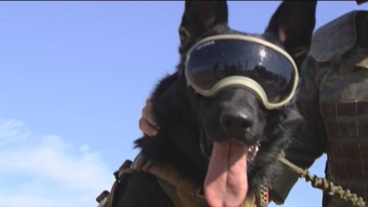 De 'maniobras' caninas con los Cuerpos de Seguridad y de Defensa de España