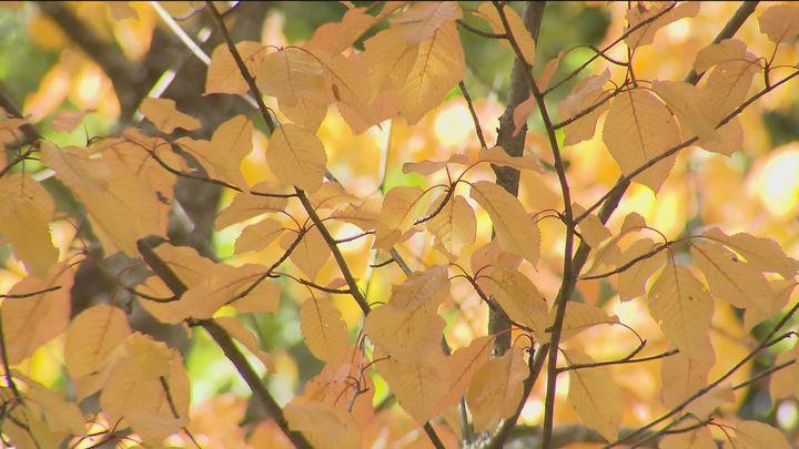 El otoño escurialense en el bosque de La Herrería