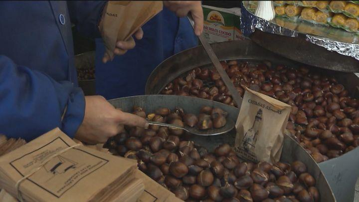 Comienza la recolección de castañas en Rozas de Puerto Real