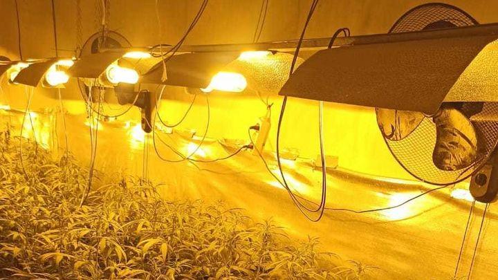 La Policía Municipal de Móstoles desmantela otras dos plantaciones de marihuana en Las Sabinas