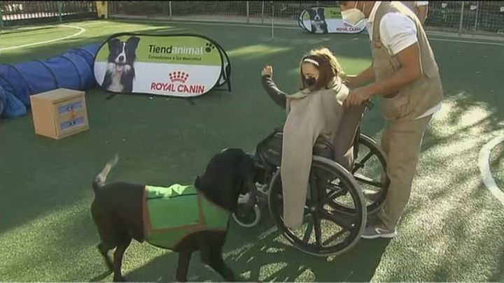Un taller enseña a los escolares de Boadilla la ayuda de los perros a las personas con discapacidad
