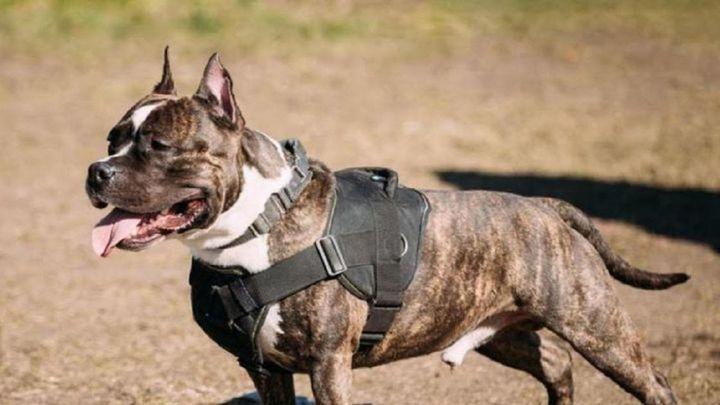 Un pipican genera conflicto entre dueños de perros y padres en Móstoles